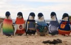 Oldest Man in Australia Knits Sweaters for Penguins