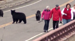 Black Bears…Chase People…