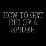 How To Get Rid Of A Spider?