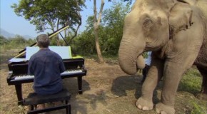 Music for Elephants (2016) A documentary about elephants at a sanctuary in Thailand and their reaction to piano music.