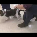 Dog Sounds Like A Tie Fighter From Star Wars