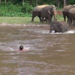 Elephant Comes To Rescue Man In River