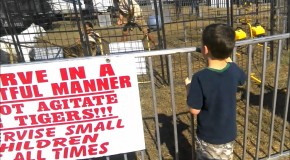 Tiger Attacks Trainer At The Pensacola Interstate Fair