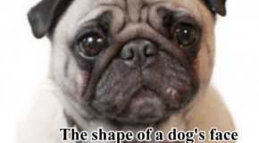 Surprising Facts About Dogs