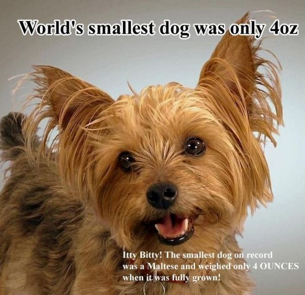 surprising-facts-about-dogs02