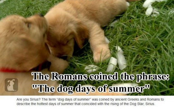 surprising-facts-about-dogs06
