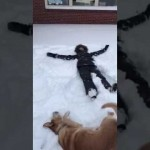 Dog Is Doing A Snow Angel Aside His Human