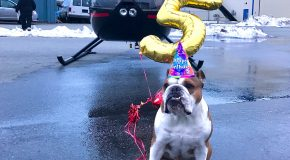 Bentley The Bulldog Celebrates His Fifth Birthday