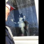 Canada Post Mail Carrier VS Attack Cat