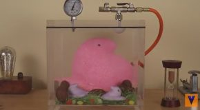 Giant Marshmallow Peep Inside Of A Easter-Filled Vacuum Chamber