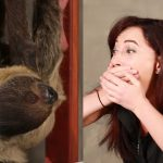 Girl Dying To Meet A Sloth… Meets A Sloth