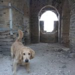 Hiking The Great Wall Of China With My Dog