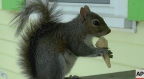 Meet Putter, The Ice Cream-Loving Squirrel