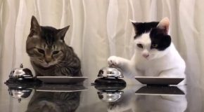 These Cats Are Taking Over The World With Their Polite Manners