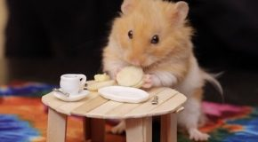 The Tiny Daily Life Of A Hamster