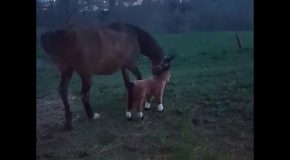 Curious Horse Has Unexpected Reaction To Stuffed Animal Horse