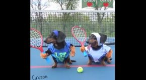 Super Smash Dachshund Tennis