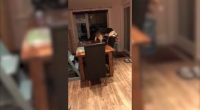Dog Uses Furniture To Get French Fries