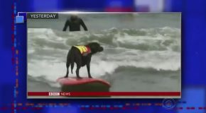 A BBC Anchor's Indifferent Reading of a Surfing Dog Story