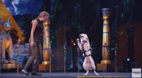 Dogs And Trainer Deliver Incredible Tricks – America's Got Talent 2017