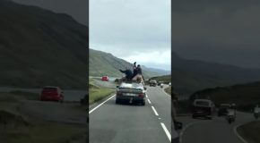 Kids Risk Their Lives Car Surfing in Scotland