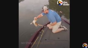 Kittens Swim Up To Fisherman's Boat Looking For Help
