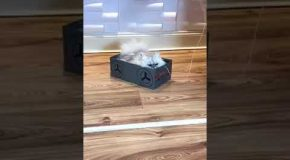 A Big Fluffy Cat Goes For a Ride in a Shoebox Car