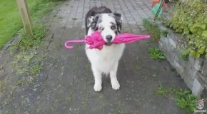 Dog Performs A Graceful Little Dance With A Frilly Pink Umbrella