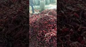 1000 Reasons To Wash Your Dried Chiles Before Eating Them