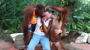 Having Fun With Orangutans!