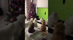 Confused Cats Watch TV