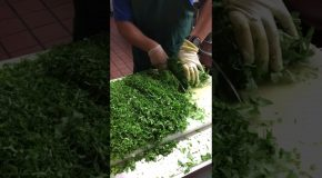 Satisfying Video of Cilantro Being Chopped