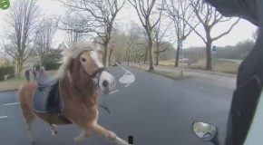 Scooter Driver Helps Woman Catch Her Runaway Horse