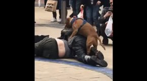 Dog Starts Humping Two Drunk Men Fighting On The Streets In Bristol