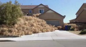Tumbleweeds Invade A Suburb and It's Pretty Freaky