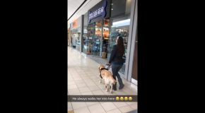 Guide Dog Makes Sure Owner Doesn't Forget Important Shopping Stop