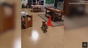 Australia Problems : Wild Koala Bear Walks Into A Daycare
