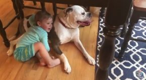 Baby Comforts Bulldog During Storm