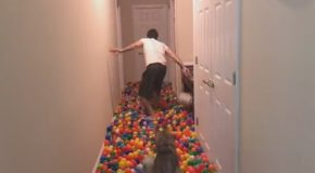 I Made My Dog a Pit of 5400 Balls