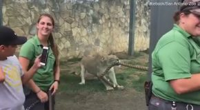 Three World Wrestling Entertainment Wrestlers Attempt Tug-Of-War Against Lioness!