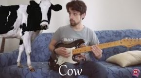 Animal Sounds on Guitar