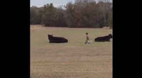 Guy Bets Kid $20 He Can't Sneak Up On Steer and Jump on it's Back