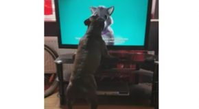 Dog Loses It Over Cat Commercial