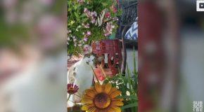 Adorable Cat Is Amazed By Colourful Butterfly In Garden