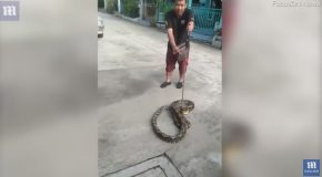 Horrifying Moment a Huge Python Attacks a Family's Pet Cat