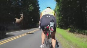 Lucky Cyclists Narrowly Avoid Flying Deer Carnage