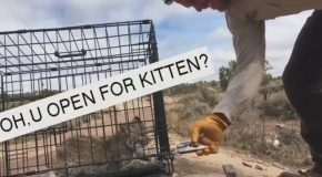 Freeing An Angry Bobcat Kitten Is Not Our Idea Of A Good Time!