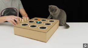 How to Make a Whack-A-Mole Game for Your Cat