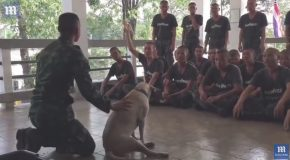 Soldier Demonstrates CPR On His Loyal Pet Dog