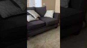 Dog Owner Accidentally Taught His Pet an Impressive New Trick